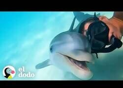Enlace a Un hombre y su perro se hacen amigos de un delfín salvaje