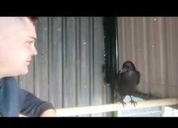 Enlace a Este chico se enzarza en una acalorada discusión con un cuervo