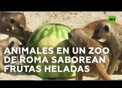 Enlace a Refrescan con frutas heladas a los animales del Zoo de Roma
