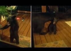 Enlace a Un pequeño oso se cuela en una casa particular y su madre viene a buscarlo