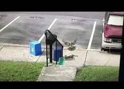 Enlace a La increíble maniobra de un conejo para escapar del ataque de un halcón