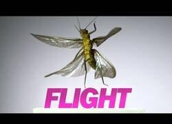 Enlace a Así es el despegue y vuelo de insectos a 3200 fotogramas por segundo
