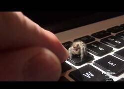 Enlace a Entrenando a una araña para que salude chocando los 5