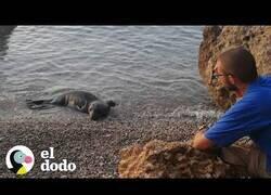 Enlace a Cuidando de dos focas rescatadas en la playa