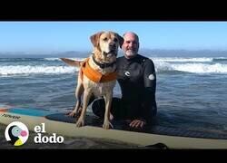Enlace a No existe un perro que adore más el surf y la playa