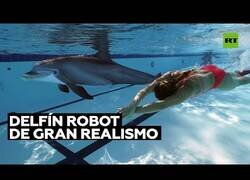 Enlace a Crean un delfín robot de gran realismo para sustituir a los que están en cautividad
