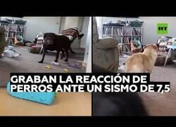 Enlace a Así reaccionan los perros a un terremoto