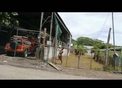 Enlace a Un ladrón experimenta los efectos de intentar saltar una valla electrificada