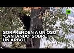 Enlace a Un oso se pone a cantar en lo alto de un árbol
