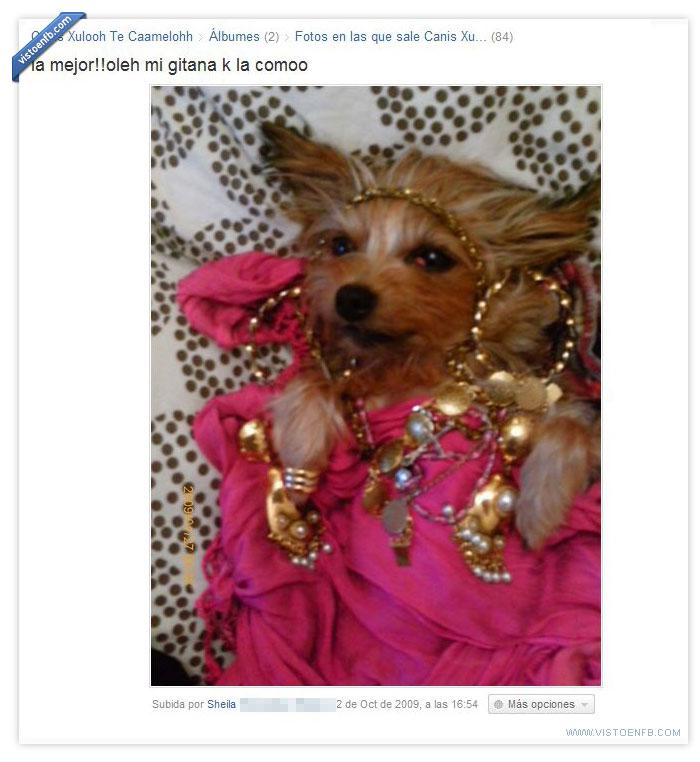 cani,perro,reshulon,vergüenza ajena