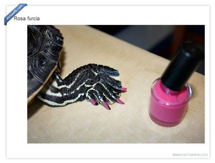pintauñas,tortuga,uñas