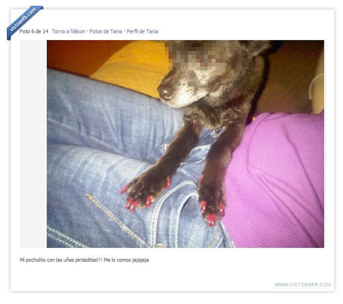 esmalte,perro,pobreperro,uñas
