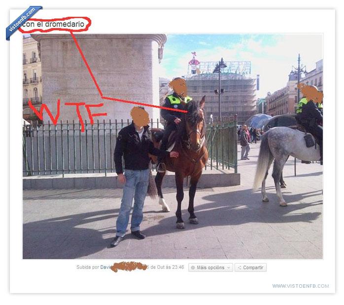 caballo,dromedario,fail,policía