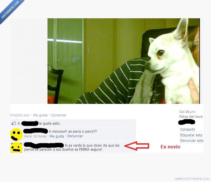 Ex,fail,perro