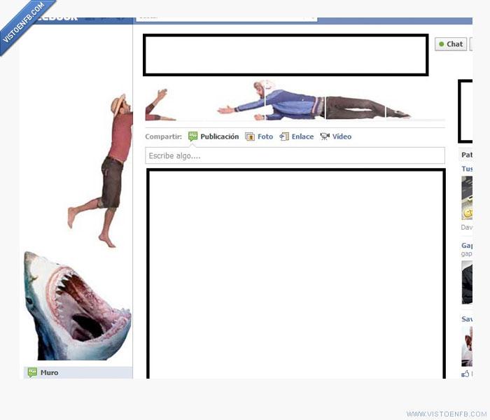 facebook,perfil,tiburon