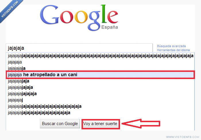 atropello,cani,google