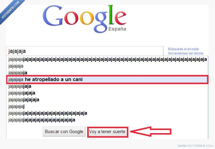 atropello,cani,google