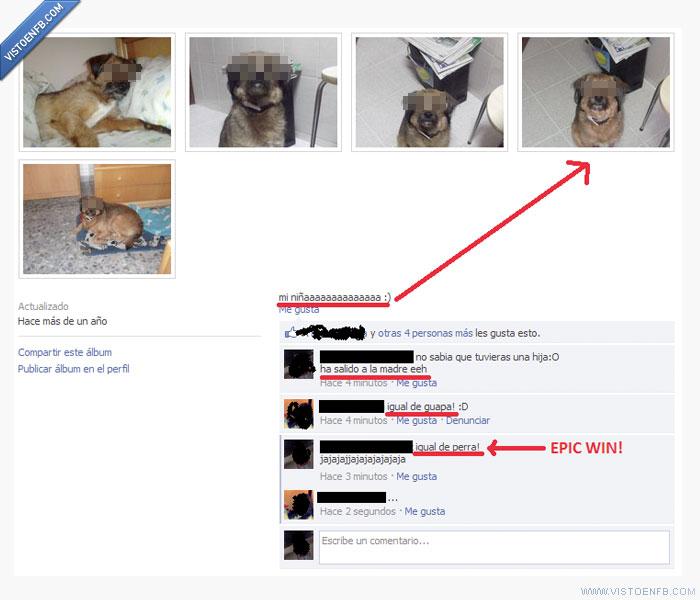 fotos,perro
