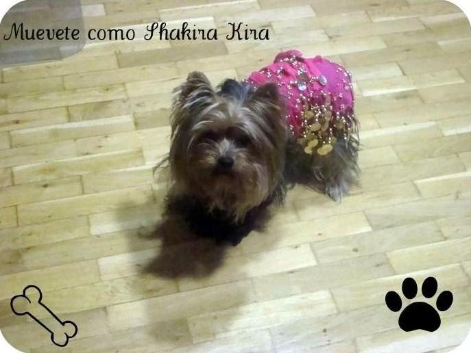 cani,estupidez,mascota,shakira