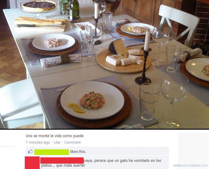 gato,platos,vomitar