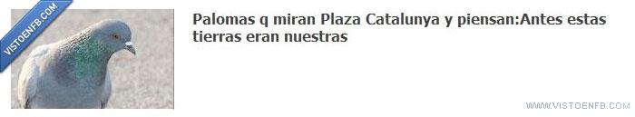 acampada,palomas,plaza catalunya