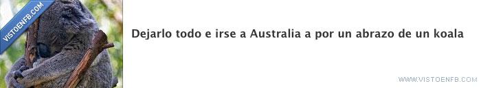 australia,dejarlo todo,koala