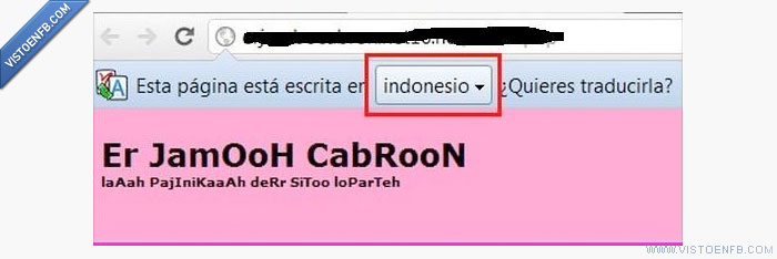 canis,google wins,indonesio