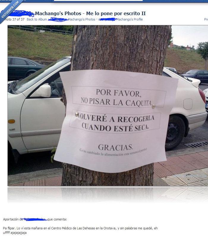 aviso,caca,cartel,mensaje,perro