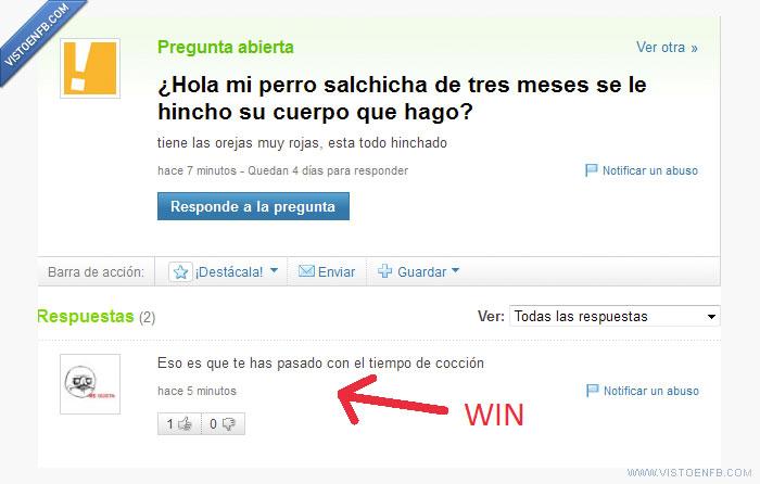 perro,respuestas,salchicha,win,yahoo