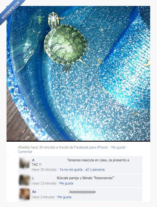 mascota,tac,tortuga
