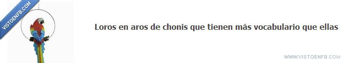 Aros,Chonis,Loros