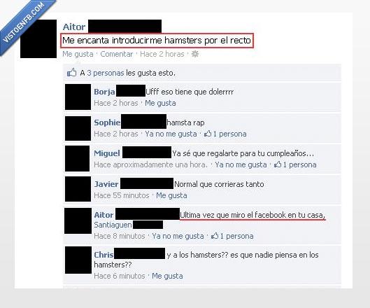 facebook,hamster,recto