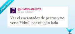 Enlace a Pitbull, Pitbull everywhere