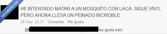 laca,mosquitos,peinado