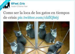Enlace a Loca de los gatos por @Feel_Cris