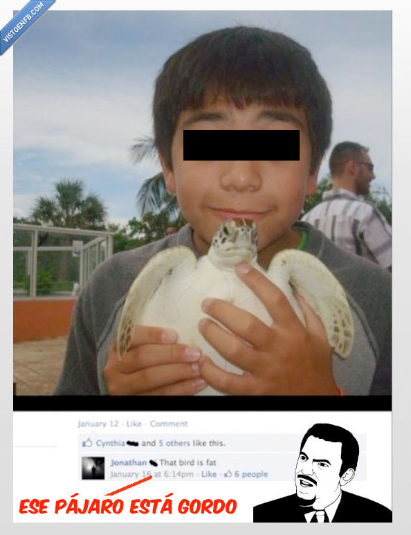 facebook. fb,gordo,pájaro,tortuga,wtf