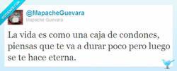 Enlace a La vida según @MapacheGuevara