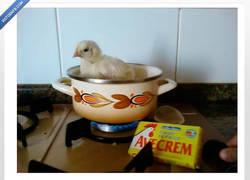 Enlace a Caldo de pollo. Literalmente