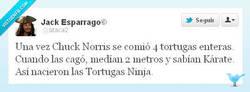 Enlace a El origen de las Tortugas Ninja por @ataca2