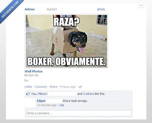 boxer,caja,chiste,malo,perro
