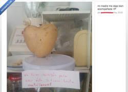 Enlace a Mi corazón palpita como una patata frita