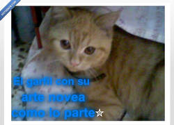 Enlace a EsHE gAtTo toH reShuLo0n