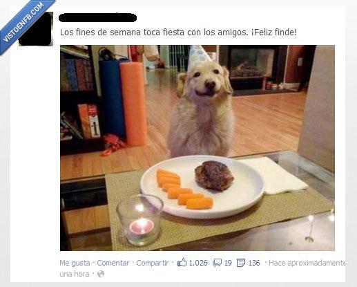 ese finde wenooooo,facebook,fiesta,forever alone,perro
