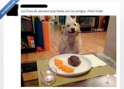 Enlace a Si mi perro tuviera facebook...