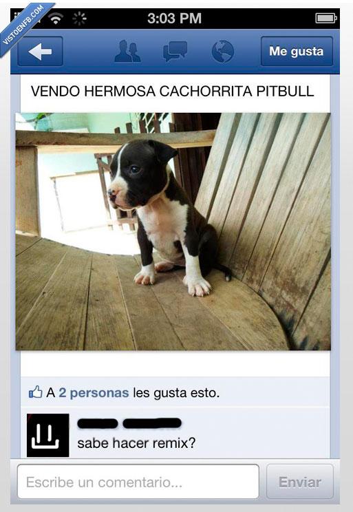 cachorro,foto,perro,Pitbull,remix