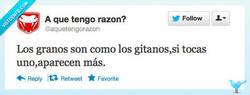 Enlace a Cuidad con los granos por @aquetengorazon