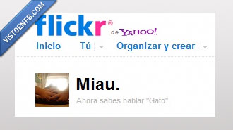 flickr,gato,miau