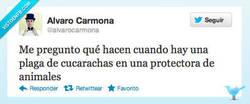 Enlace a El dilema por @alvarocarmona