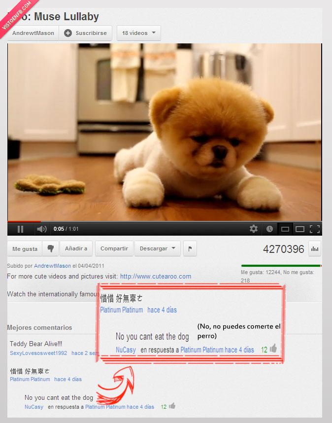 cachorro,chino,comer,guiris,perrito,perro,troll,youtube