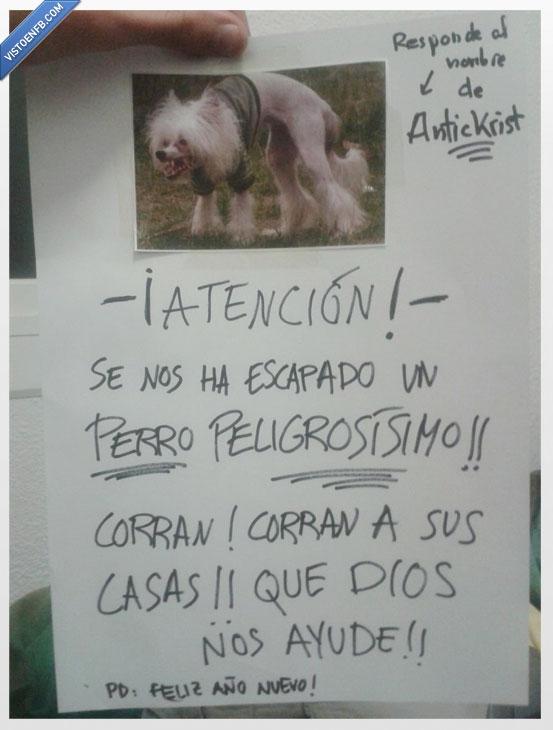 antickrist,cartel,loco,perro,risa,vecinos,wtf